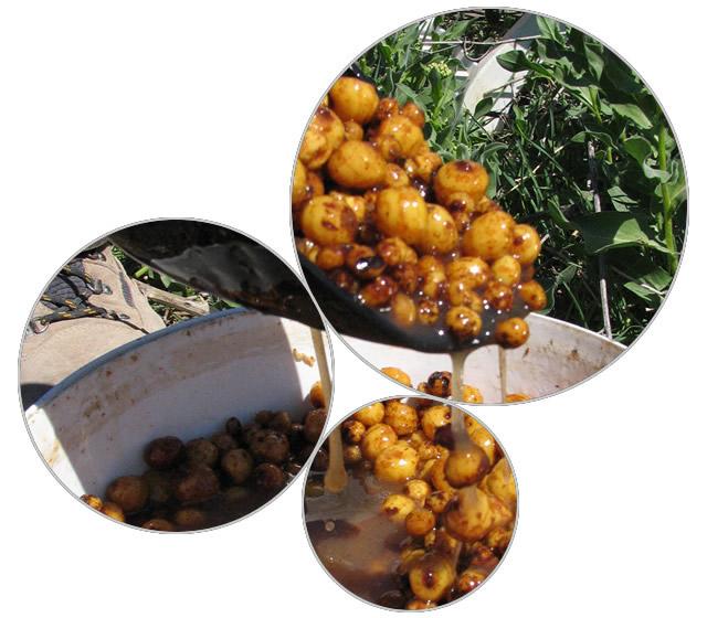 chufa preparacion1 Tigernuts