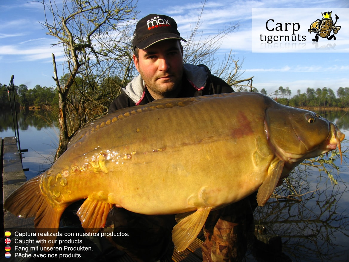 carps-caught-with-tigernuts-01