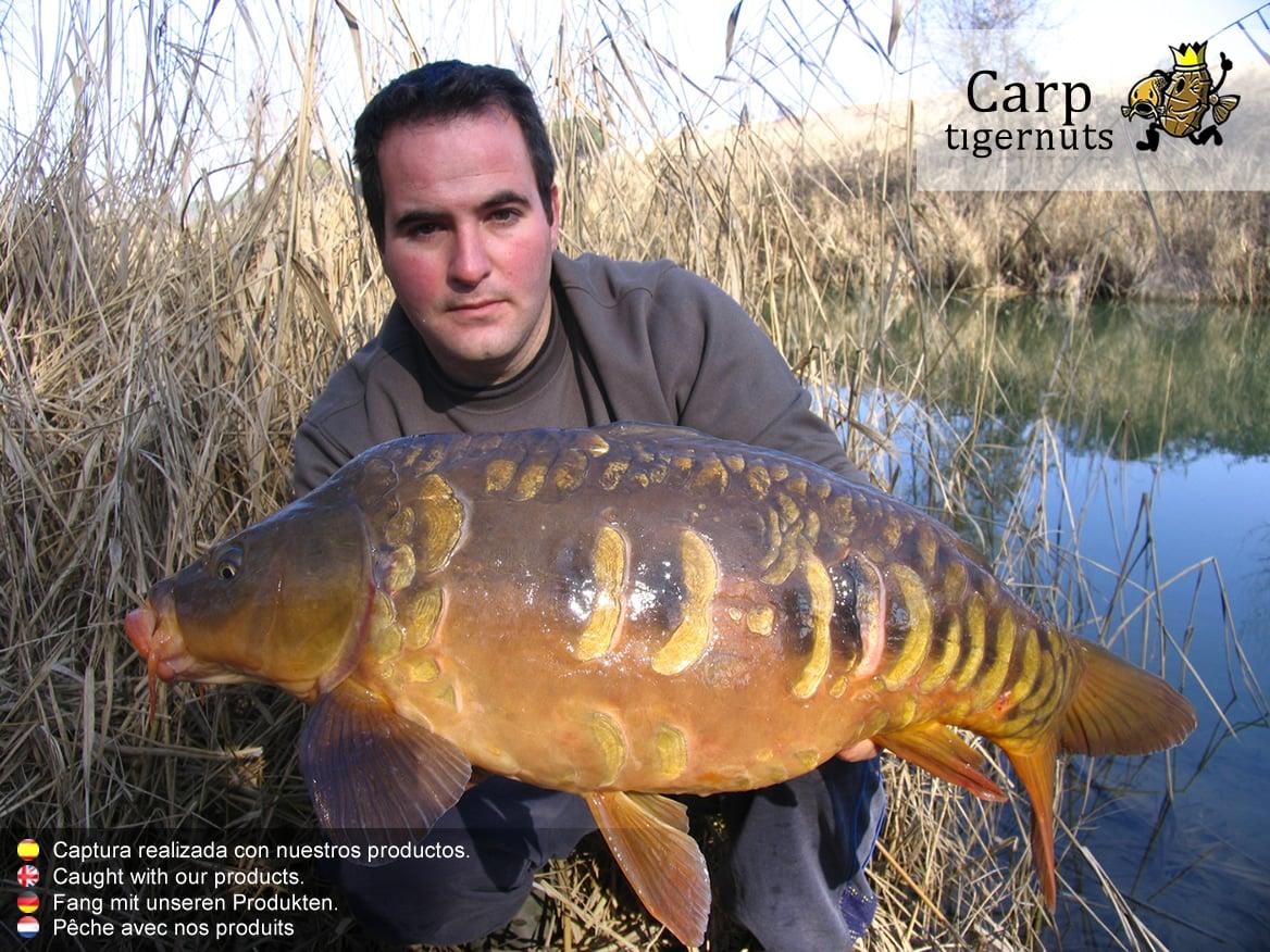 carps-caught-with-tigernuts-02
