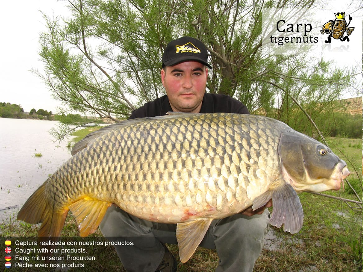 carps-caught-with-tigernuts-05.jpg