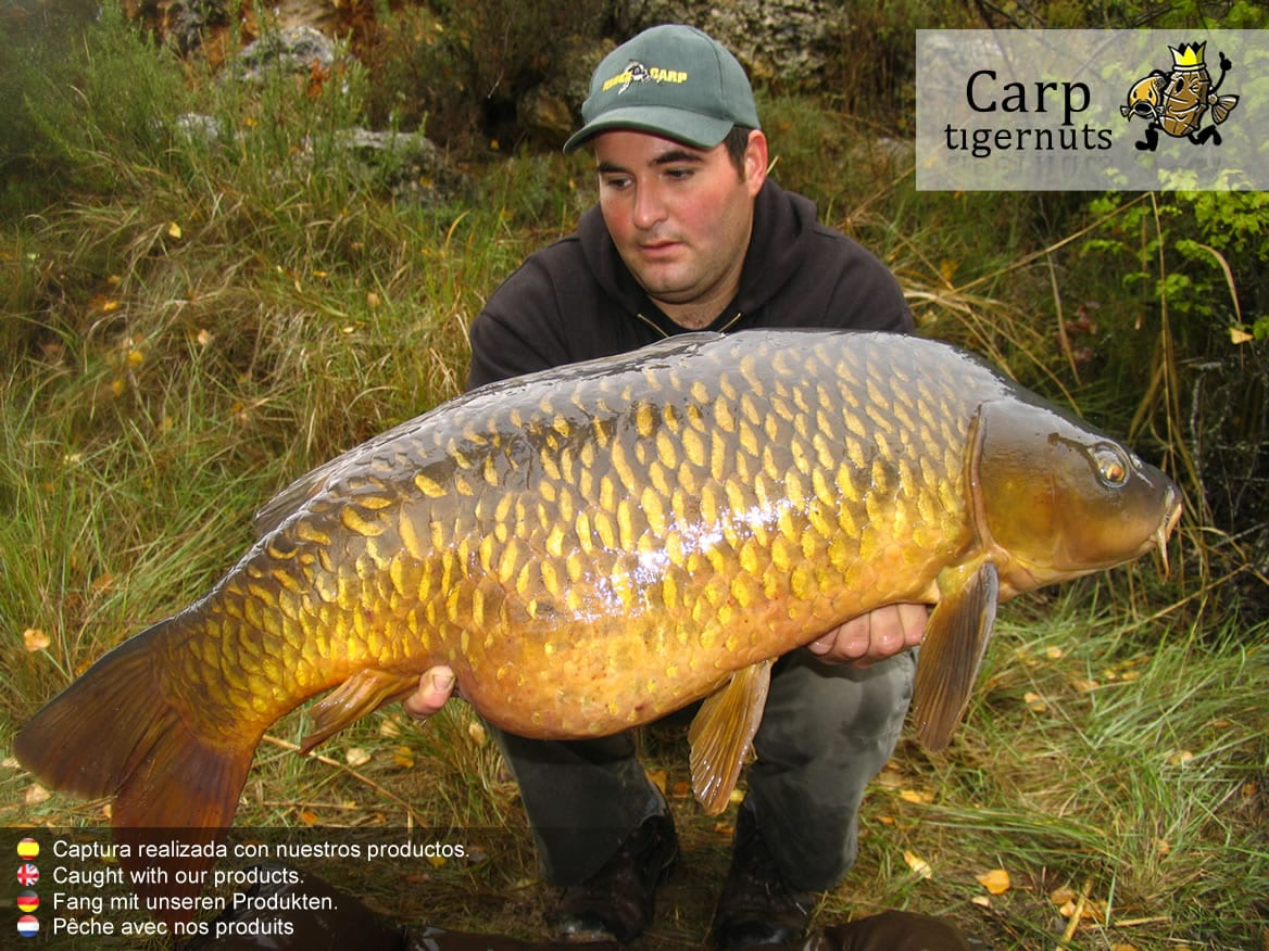 carps-caught-with-tigernuts-06