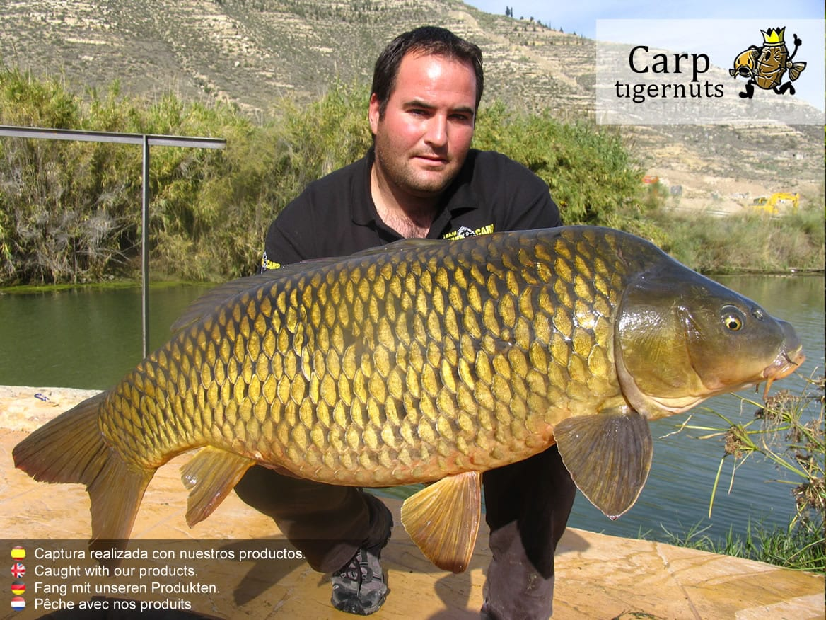 carps-caught-with-tigernuts-07