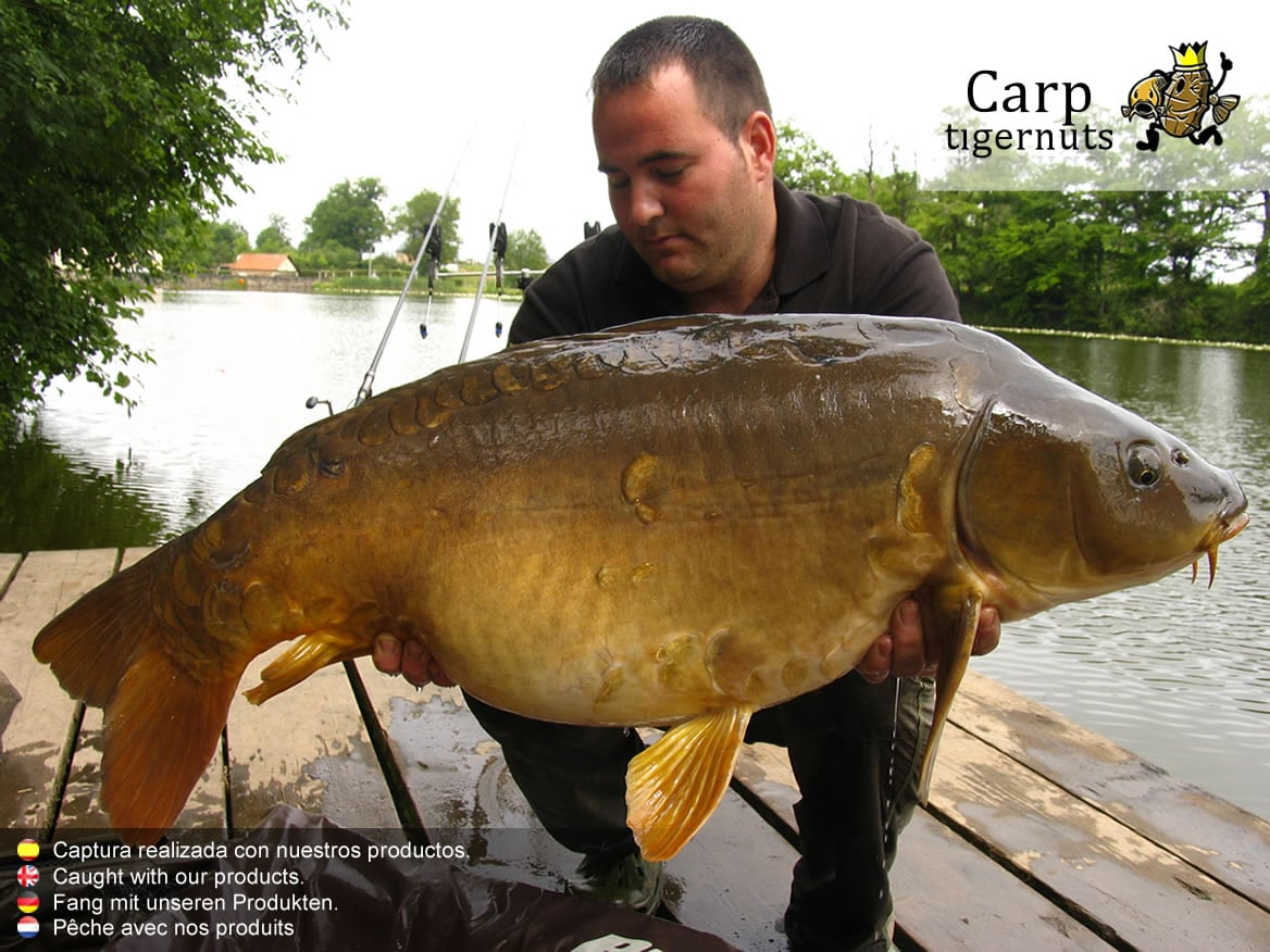 carps-caught-with-tigernuts-09