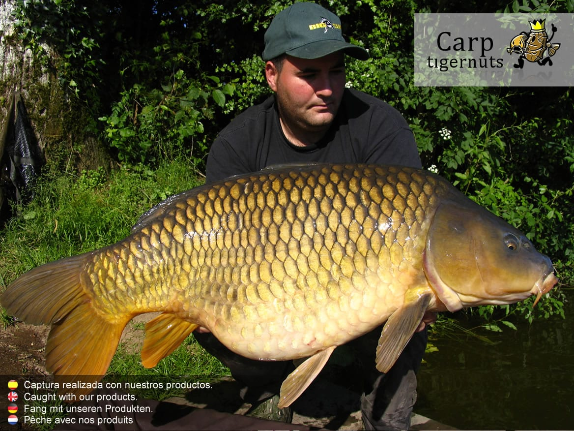 carps-caught-with-tigernuts-10
