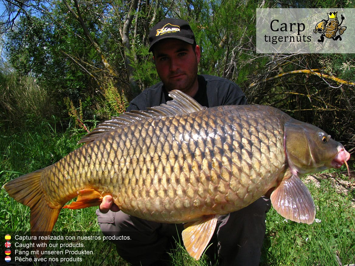 carps-caught-with-tigernuts-12