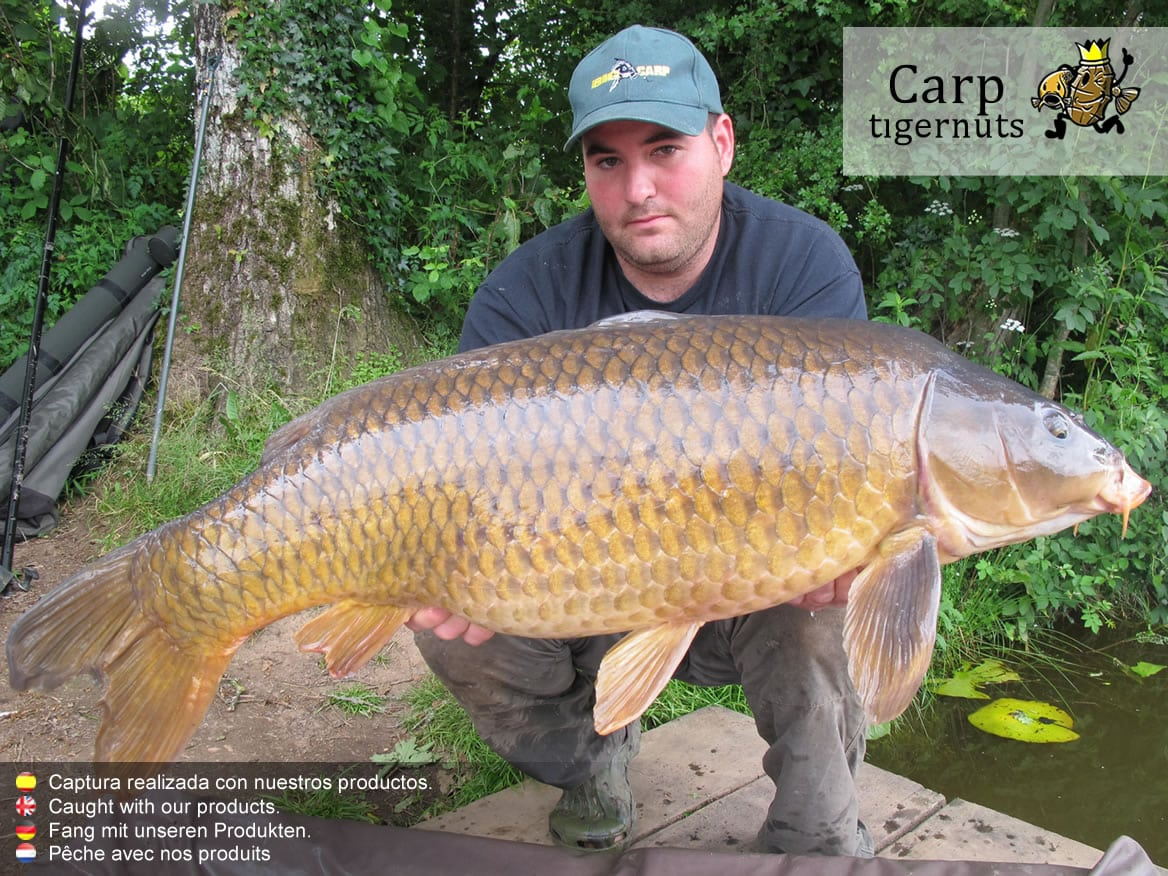 carps-caught-with-tigernuts-13